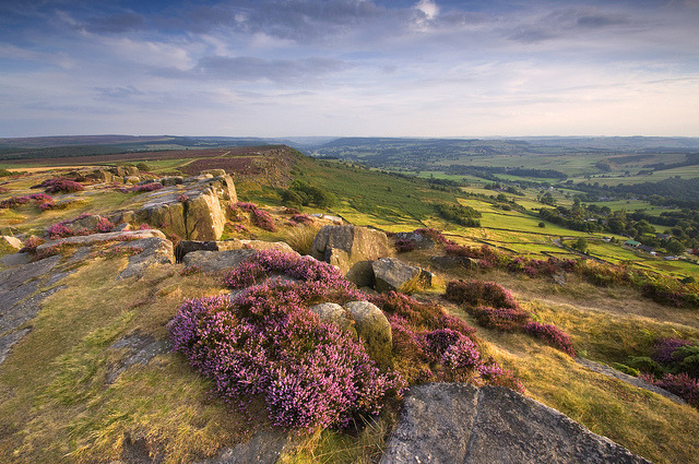 by Paul Newcombe on Flickr.Curbar Heather - Peak District National Park, England.
