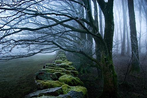 November Forest, Cumbria, England