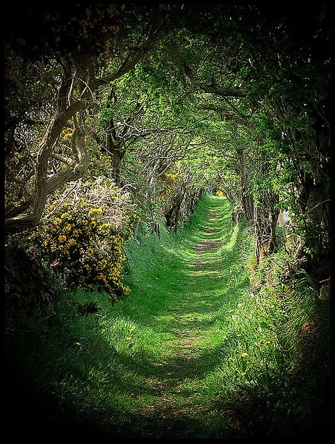 Tree Tunnel, Ballynoe Co Down, Ireland