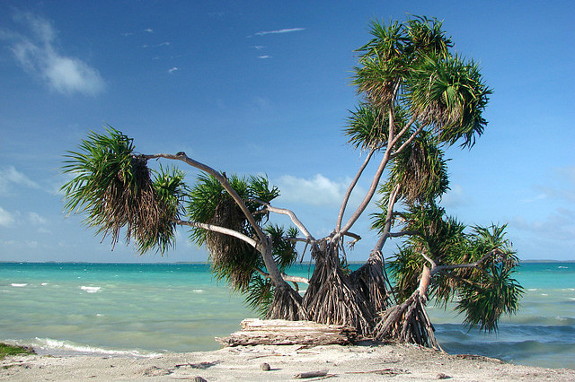 by Jerry Curtis on Flickr.A typical tropical paradise scene overlooking the lagoon on Fanning Island, Kiribati.