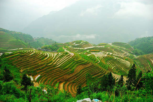 by J Chau on Flickr.Longji Terraces near Pingan Village - Guilin Province, China.