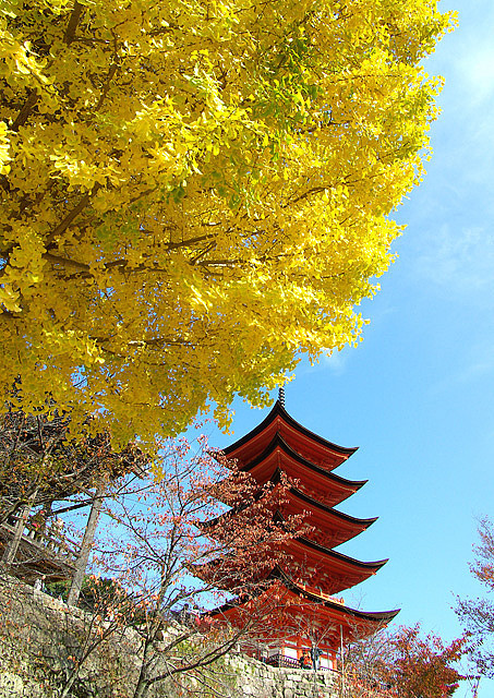 Ginkgo leaves at Miyajima Five-Storied Pagoda, Japan