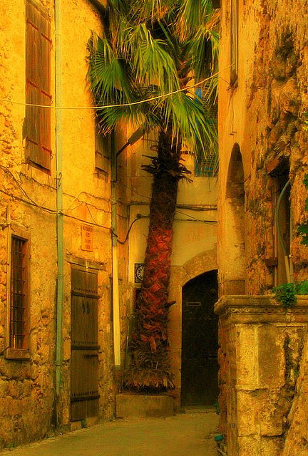 Hidden palm tree on the streets of Kyrenia, Cyprus