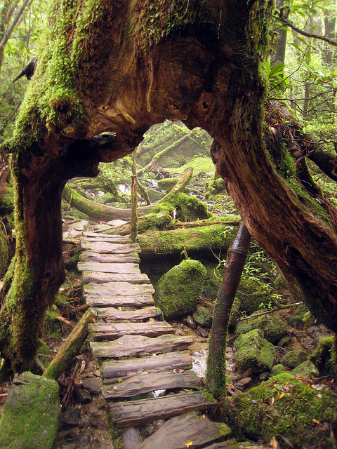 "Beautiful primeval forest at Shiratani Unsuikyo Ravine, Yakushima, Japan .]]>"" id=""IMAGE-m7ea3nkZR81r6b8aao1_500″ /></noscript><img class="