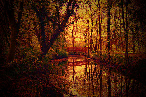 Forest Bridge, Hesse, Germany