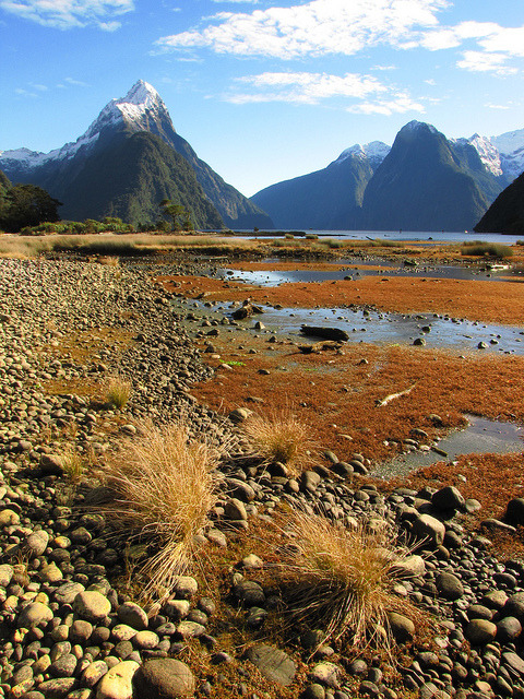 Low tide in Milford Sound, Fiordland, New Zealand