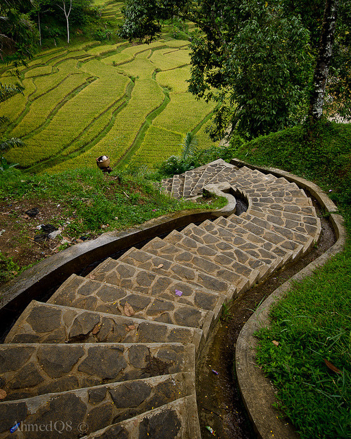 Stairs to rice terraces in Naga village, Java, Indonesia