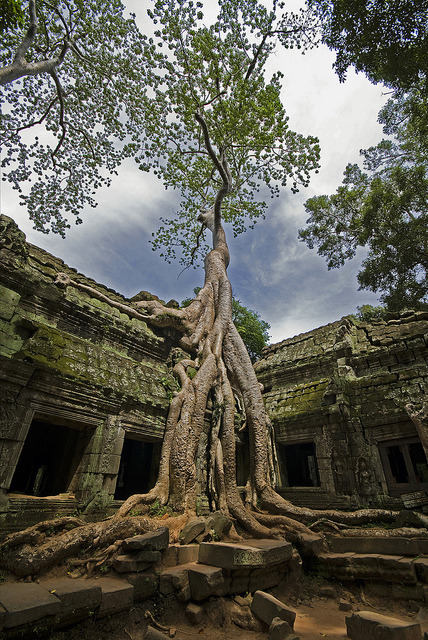 The jungle temple, Ta Prohm, Cambodia