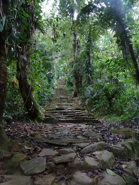 Jungle stairs to Ciudad Perdida, Colombia